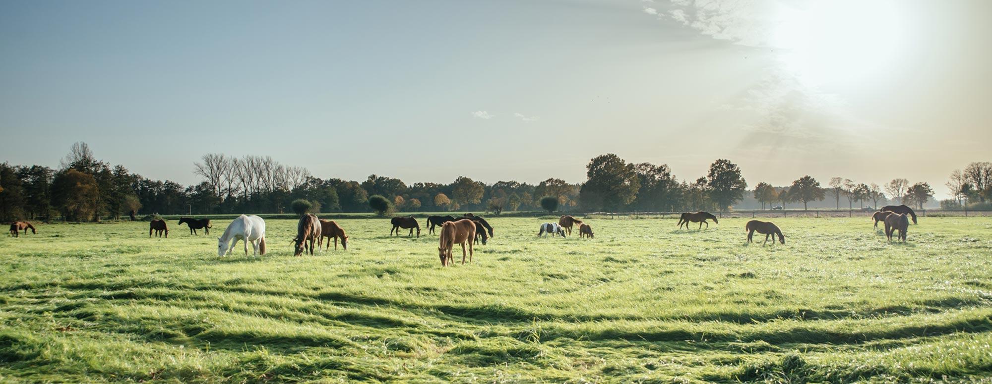 Gästehaus und Pferdeparadies Depenau